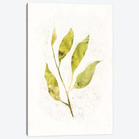 Sapling IV Canvas Print #VBO258} by Victoria Borges Canvas Art