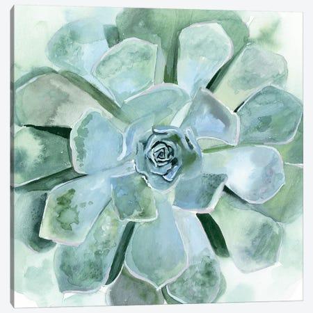 Verdant Succulent III Canvas Print #VBO352} by Victoria Borges Canvas Print