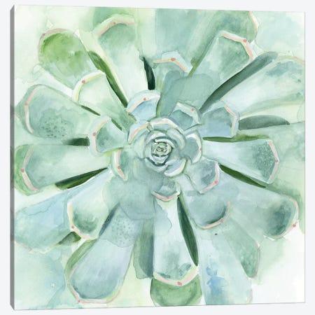 Verdant Succulent IV Canvas Print #VBO353} by Victoria Borges Art Print