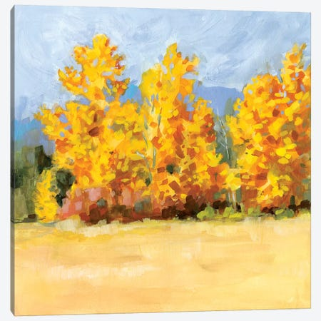 Golden Aspen Trees I Canvas Print #VBO495} by Victoria Borges Canvas Print