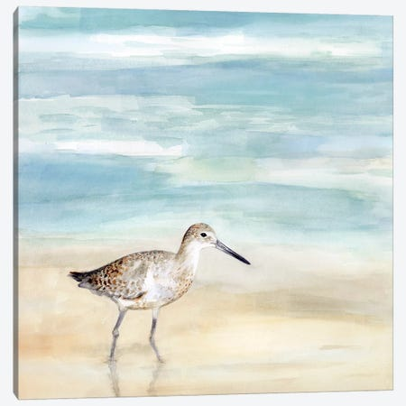 Speckled Willet I Canvas Print #VBO505} by Victoria Borges Canvas Print