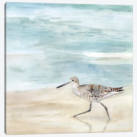 Speckled Willet II Canvas Print #VBO506} by Victoria Borges Art Print