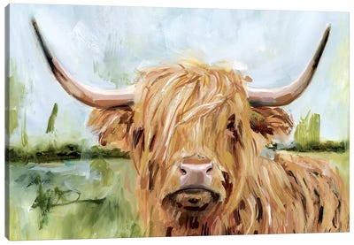 Highland Grazer I Canvas Art Print