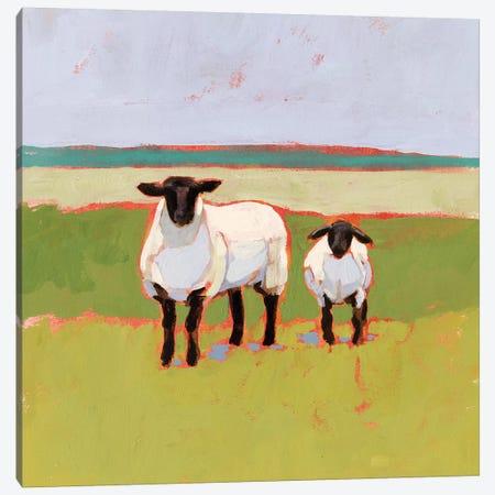 Suffolk Sheep I Canvas Print #VBO799} by Victoria Borges Canvas Print
