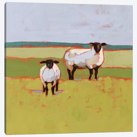 Suffolk Sheep II Canvas Print #VBO800} by Victoria Borges Canvas Print