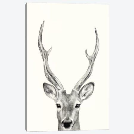 Animal Mug IV Canvas Print #VBO816} by Victoria Borges Art Print
