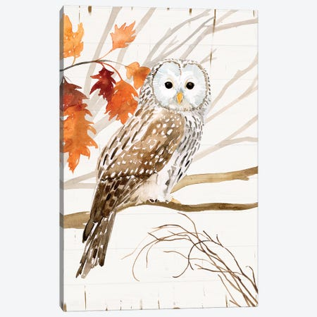 Harvest Owl I 3-Piece Canvas #VBO829} by Victoria Borges Canvas Print