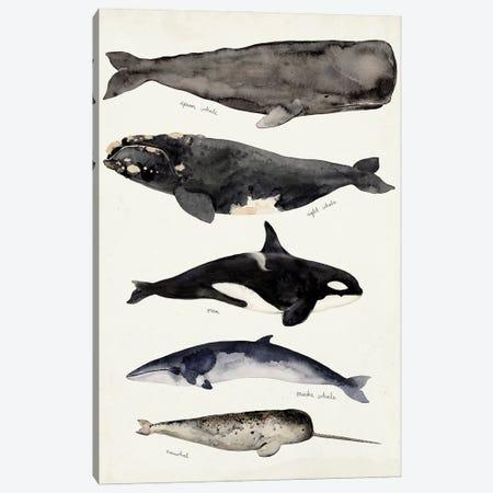 Whale Chart I Canvas Print #VBR139} by Victoria Barnes Canvas Print