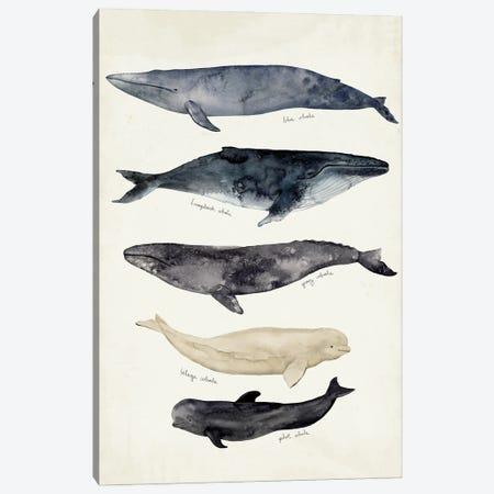 Whale Chart II Canvas Print #VBR140} by Victoria Barnes Canvas Art
