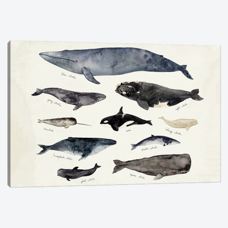 Whale Chart III Canvas Print #VBR141} by Victoria Barnes Canvas Artwork