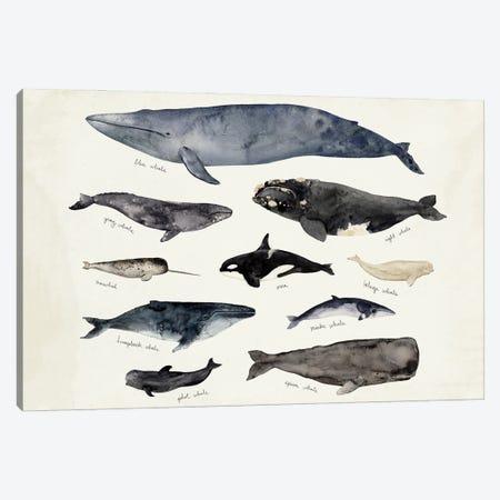 Whale Chart III Canvas Print #VBR141} by Victoria Barnes Canvas Artwork