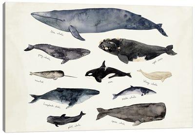 Whale Chart III Canvas Art Print