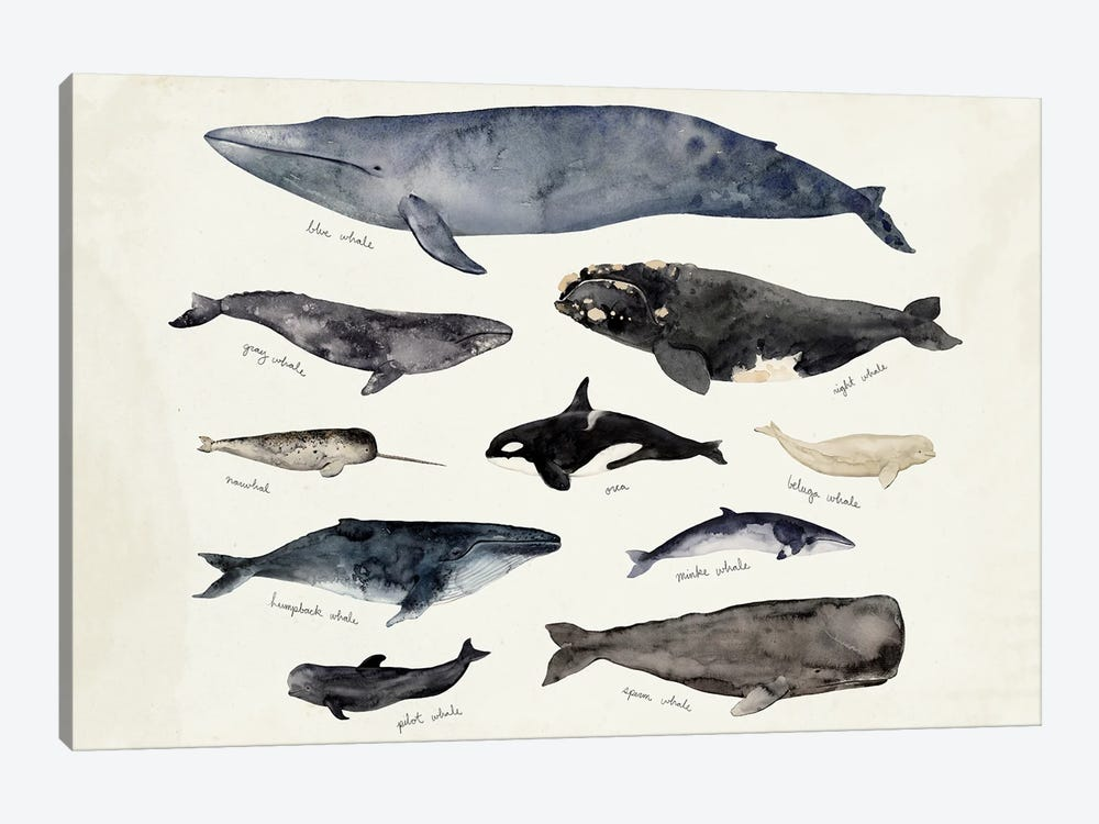 Whale Chart III by Victoria Barnes 1-piece Canvas Art
