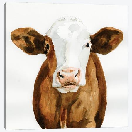 Cow Gaze II Canvas Print #VBR52} by Victoria Barnes Canvas Print
