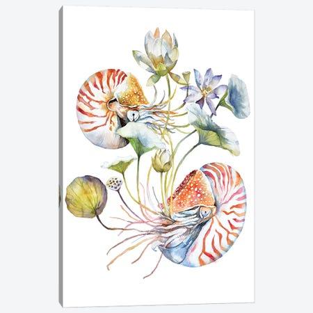 Nautilus Canvas Print #VBY32} by Violetta Boyadzhieva Canvas Wall Art