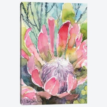 Protea Canvas Print #VBY41} by Violetta Boyadzhieva Canvas Art Print