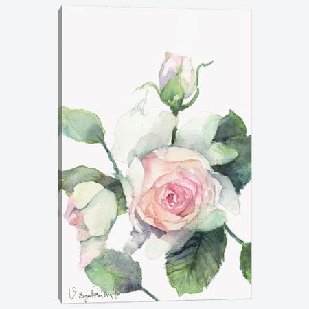 Vera Rose Canvas Print #VBY55} by Violetta Boyadzhieva Canvas Art Print