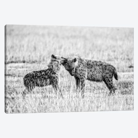 Hyena I Canvas Print #VDK1} by Vedran Vidak Canvas Art Print