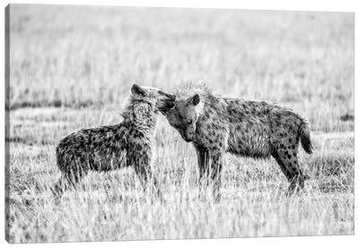 Hyena I Canvas Art Print