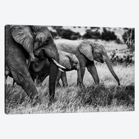 Elephant Family Canvas Print #VDK8} by Vedran Vidak Canvas Art Print