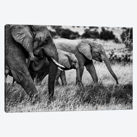 Elephant Family 3-Piece Canvas #VDK8} by Vedran Vidak Canvas Art Print