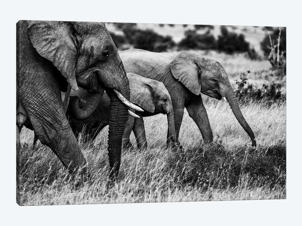 Elephant Family by Vedran Vidak 1-piece Canvas Art Print