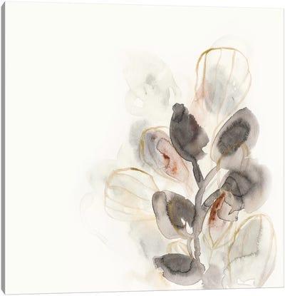 Seed Pod II Canvas Art Print