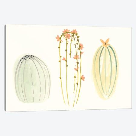 Funky Succulents I Canvas Print #VES80} by June Erica Vess Canvas Artwork