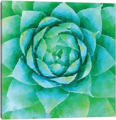 Succulente X Canvas Art Print