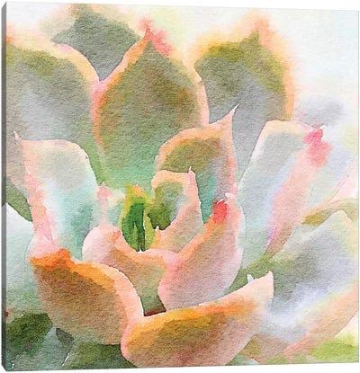 Succulente XI Canvas Art Print