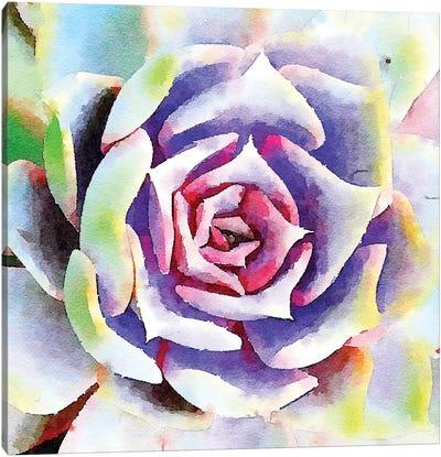 Succulente II Canvas Art Print
