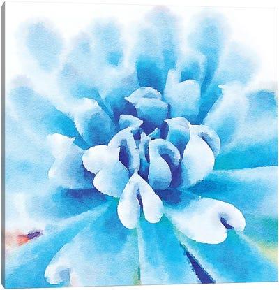 Succulente III Canvas Art Print