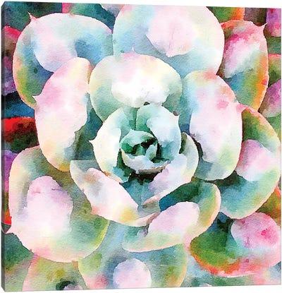 Succulente V Canvas Art Print