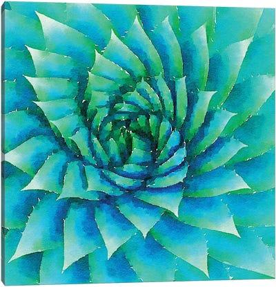 Succulente VI Canvas Art Print