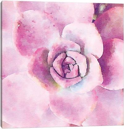 Succulente VIII Canvas Art Print