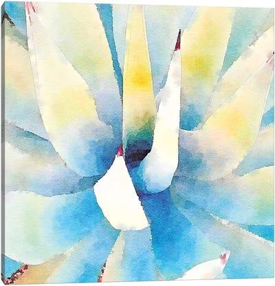 Succulente IX Canvas Art Print