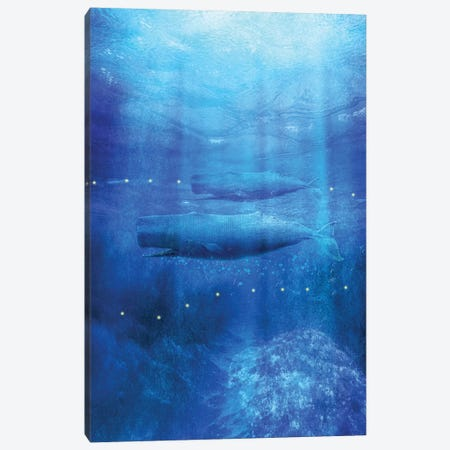 Save The Whales Canvas Print #VGO107} by Viviana Gonzalez Canvas Art Print