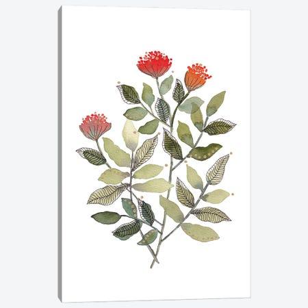 Organic Watercolor Botanicals III Canvas Print #VGO197} by Viviana Gonzalez Canvas Art