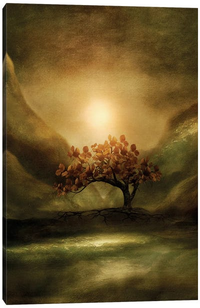 Advice From A Tree Canvas Art Print