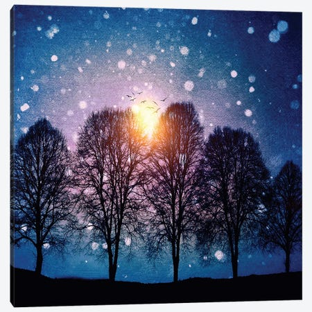 Sounds Of Winter Canvas Print #VGO59} by Viviana Gonzalez Canvas Art