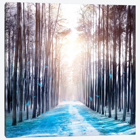 Feather Dance In Winter Canvas Print #VGO67} by Viviana Gonzalez Canvas Wall Art