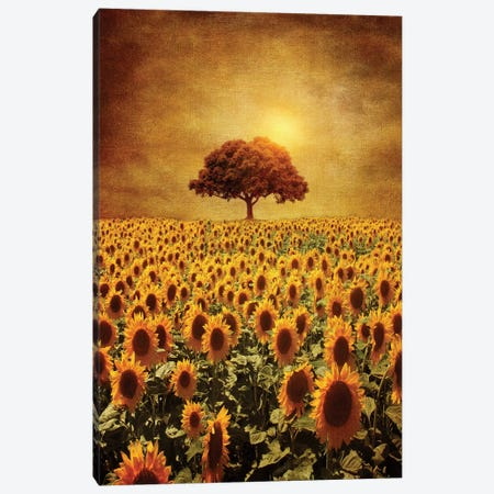 Lone Tree & Sunflowers Field Canvas Print #VGO6} by Viviana Gonzalez Canvas Art Print