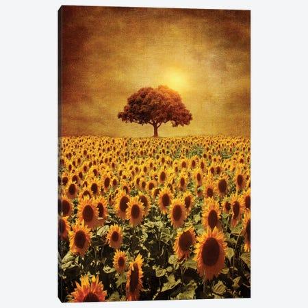 Lone Tree & Sunflowers Field Canvas Print #VGO6} by Viviana Gonzalez Canvas Art Print