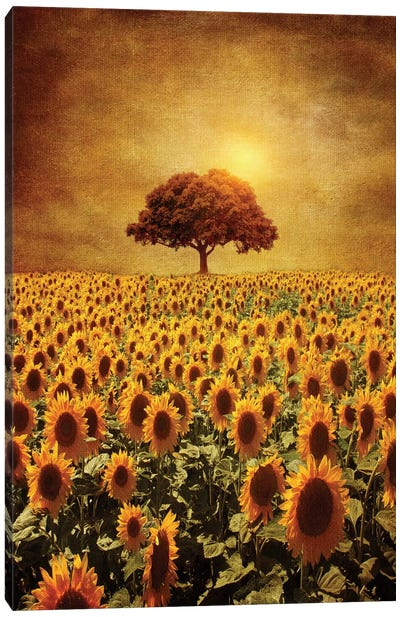 Lone Tree & Sunflowers Field Canvas Art Print