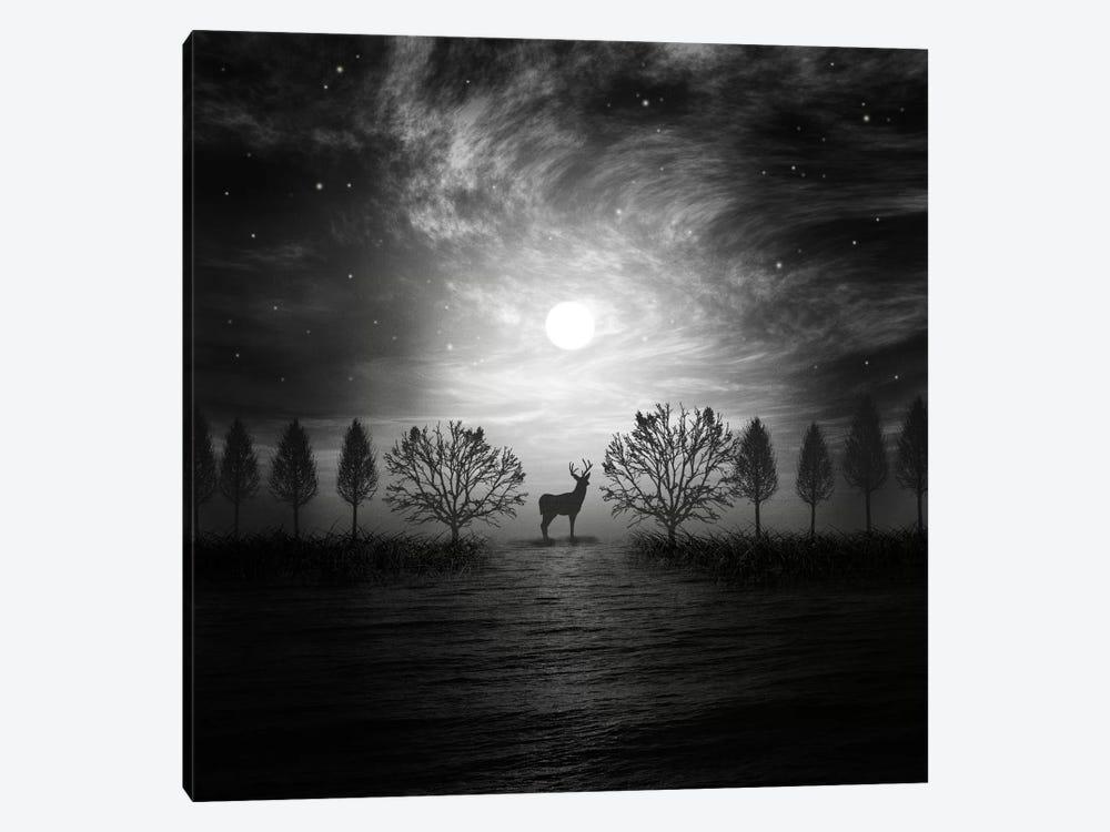 Into The Wild by Viviana Gonzalez 1-piece Canvas Artwork