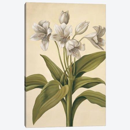 Lilies I Canvas Print #VHU11} by Virginia Huntington Canvas Art