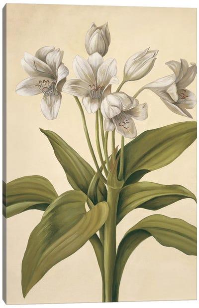 Lilies I Canvas Art Print