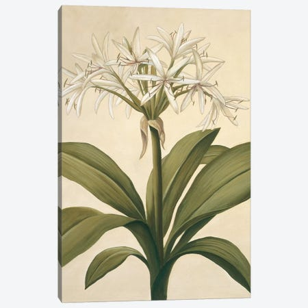 Lilies II Canvas Print #VHU12} by Virginia Huntington Canvas Artwork