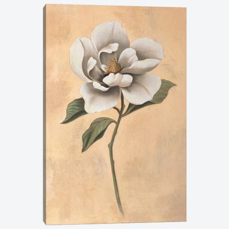 Magnolia Canvas Print #VHU13} by Virginia Huntington Canvas Wall Art