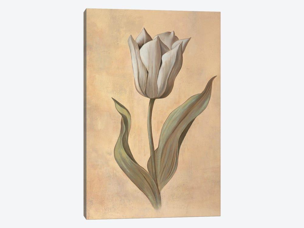 Tulip by Virginia Huntington 1-piece Canvas Artwork